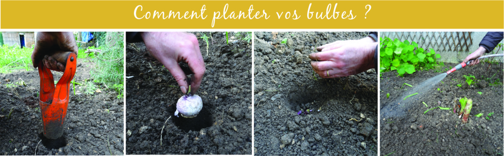 comment planter vos bulbes